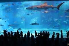 okinawa_aquarium-e1534867468525