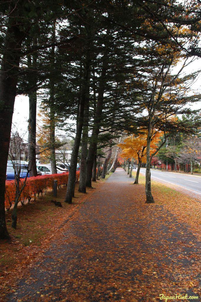 Karuizawa maple